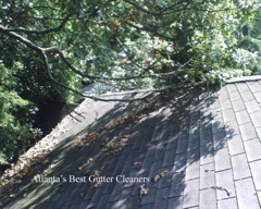 Woodstock's Best Gutter Cleaners does tree pruning of limbs coming in range of the gutters.